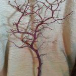 Manzanta Branches